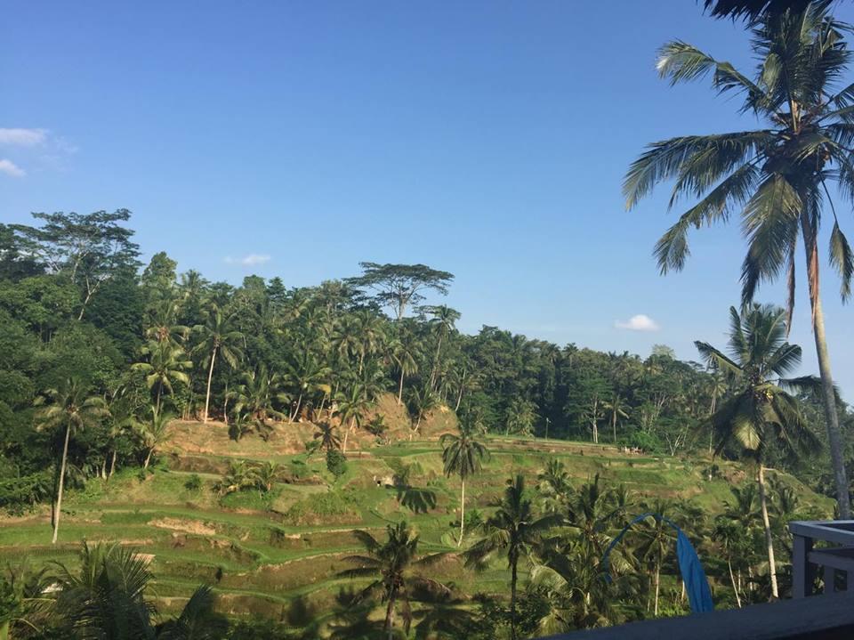 Reisterassen-Ubud-Rice-terrace-trip-bali