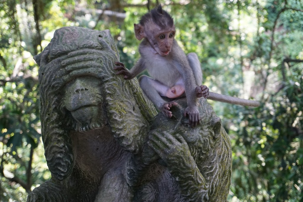 affe-monkeyforest-ubud
